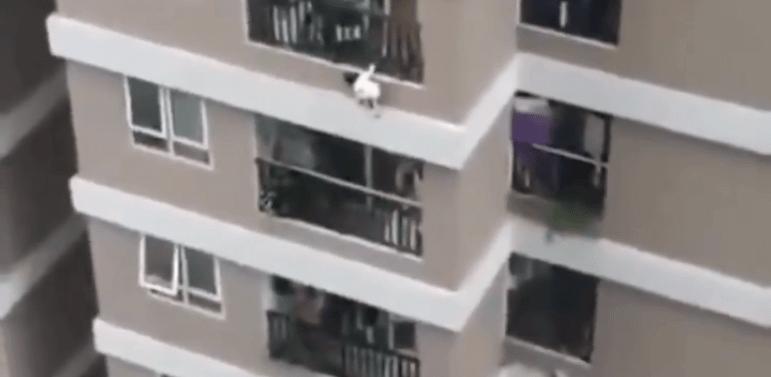 Dwulatka wypadła z 12. piętra. Dziewczynka przeżyła dzięki kurierowi