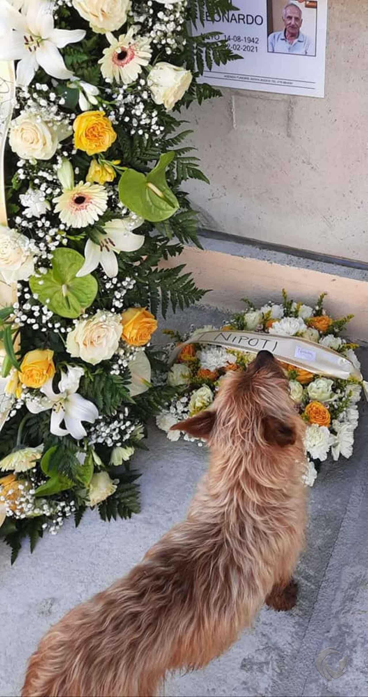 Mały piesek codziennie przebywa kilometry, aby odwiedzić grób swojego ukochanego człowieka