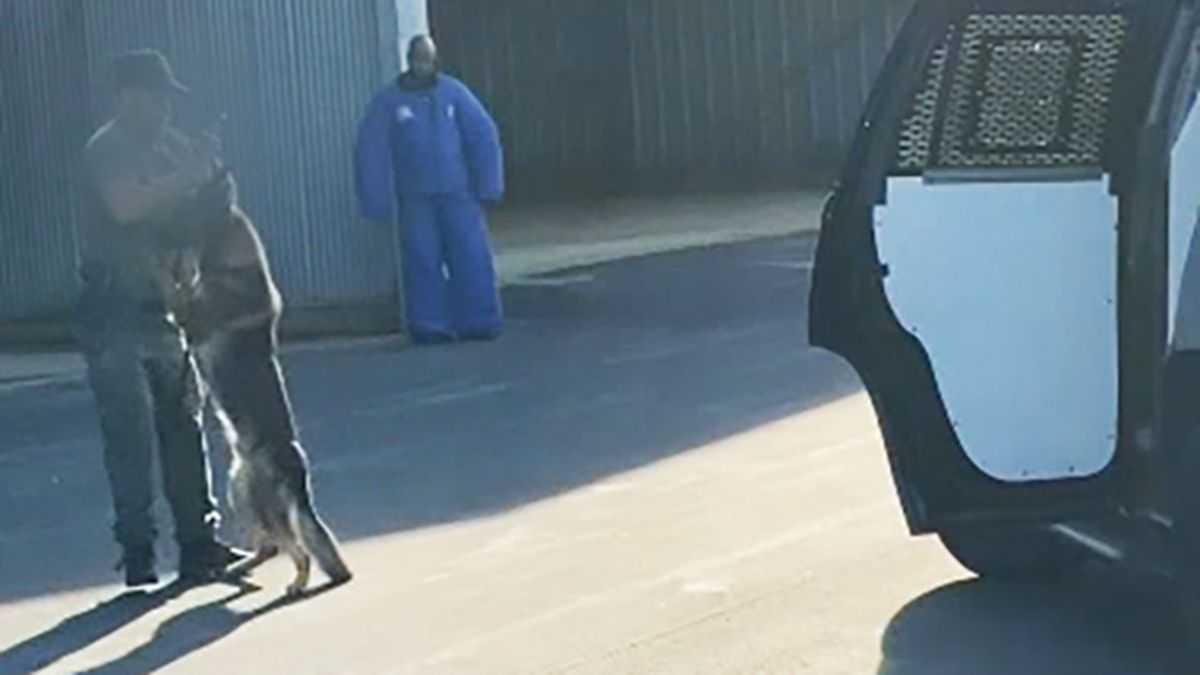 Niepokojące nagranie ukazuje, jak policjant przerzuca psa przez ramię i uderza nim o drzwi samochodu