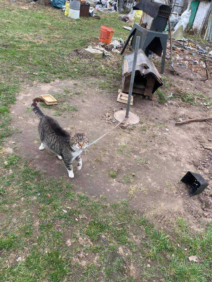 Szok! Trzymali kota na smyczy i w budzie! Co było potem?