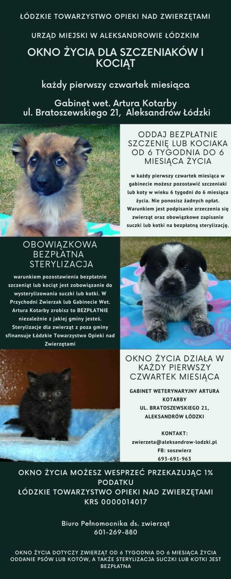 """""""Okno życia dla zwierząt"""" w Polsce! Można w nim zostawić niechciane psy i koty"""