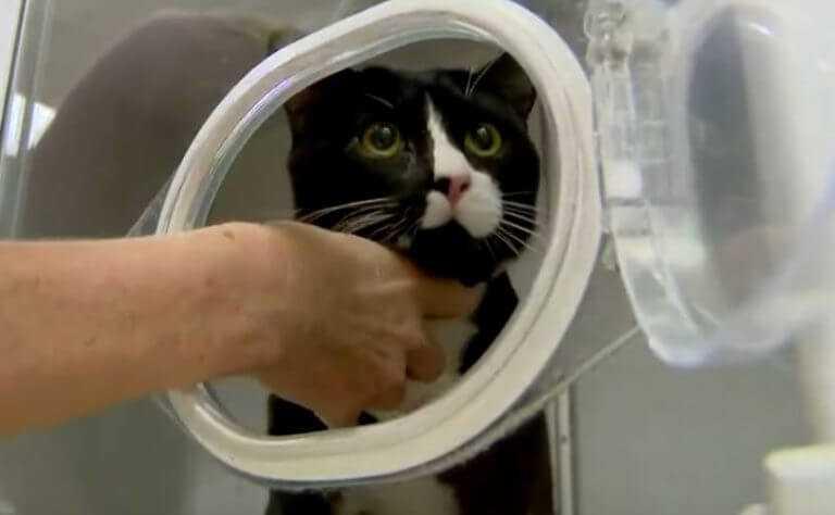 Wyprała swojego kota w pralce. Kot stracił wzrok i ma wstrząs mózgu. W pralce spędził godzinę
