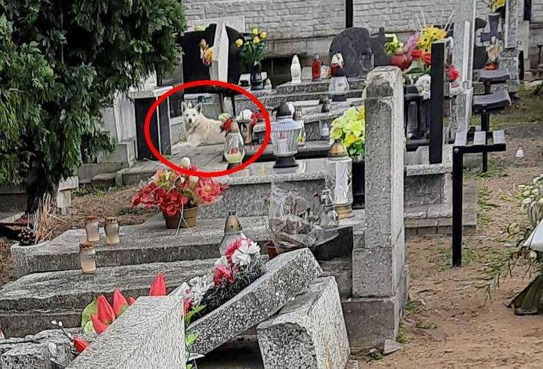 Od dwóch lat pies mieszka na cmentarzu w Bydgoszczy. Wzruszeni mieszkańcy miasta chcą pomóc czworonogowi