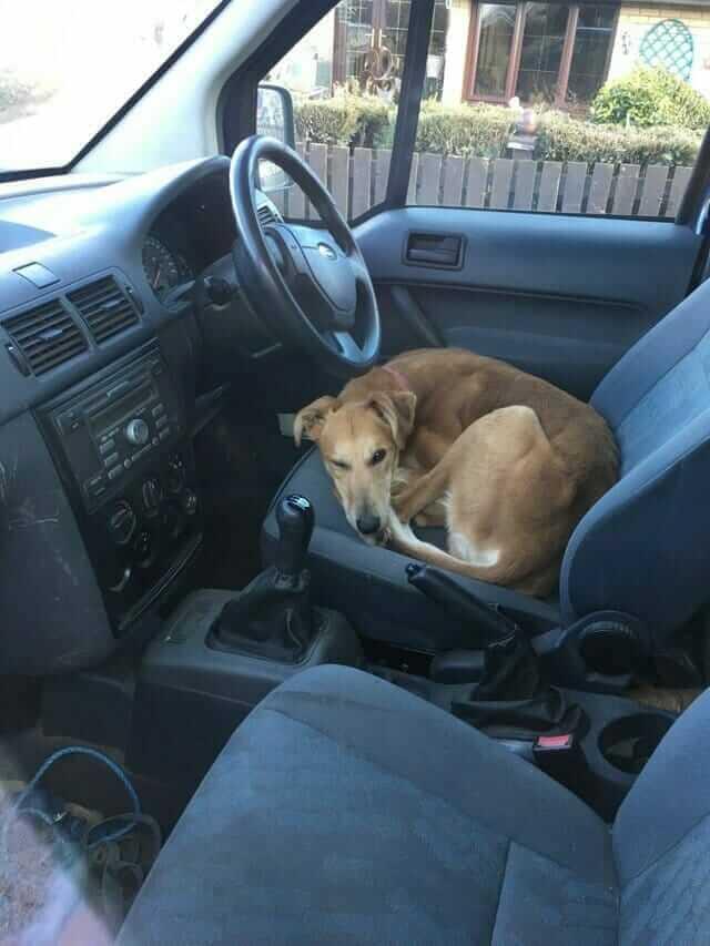 Mężczyzna zamknął psa w cudzym samochodzie, aby nie wrócił do domu. To co stało się później wzrusza