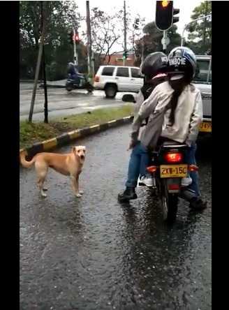Wyrzucili psa z motoru i próbowali uciec. Pies gonił ich między autami i błagał, aby go zabrali