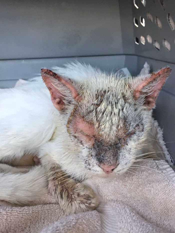 Bezdomny kot otwiera oczy po raz pierwszy od miesięcy. Ich piękno jest wręcz magiczne