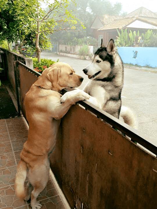 Właściciel zostawił otwarte drzwi. Samotny pies uciekł, aby spotkać się z przyjacielem