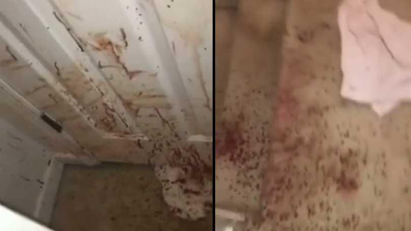 Rodzina po powrocie do domu widzi wszędzie ślady krwi! Zrozumieli wszystko gdy ujrzeli swojego psa!