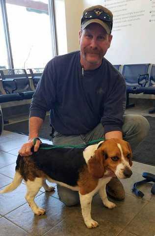 Mężczyzna uratował psa rasy beagle przed uśpieniem. Pies podziękował mu w niezwykły sposób