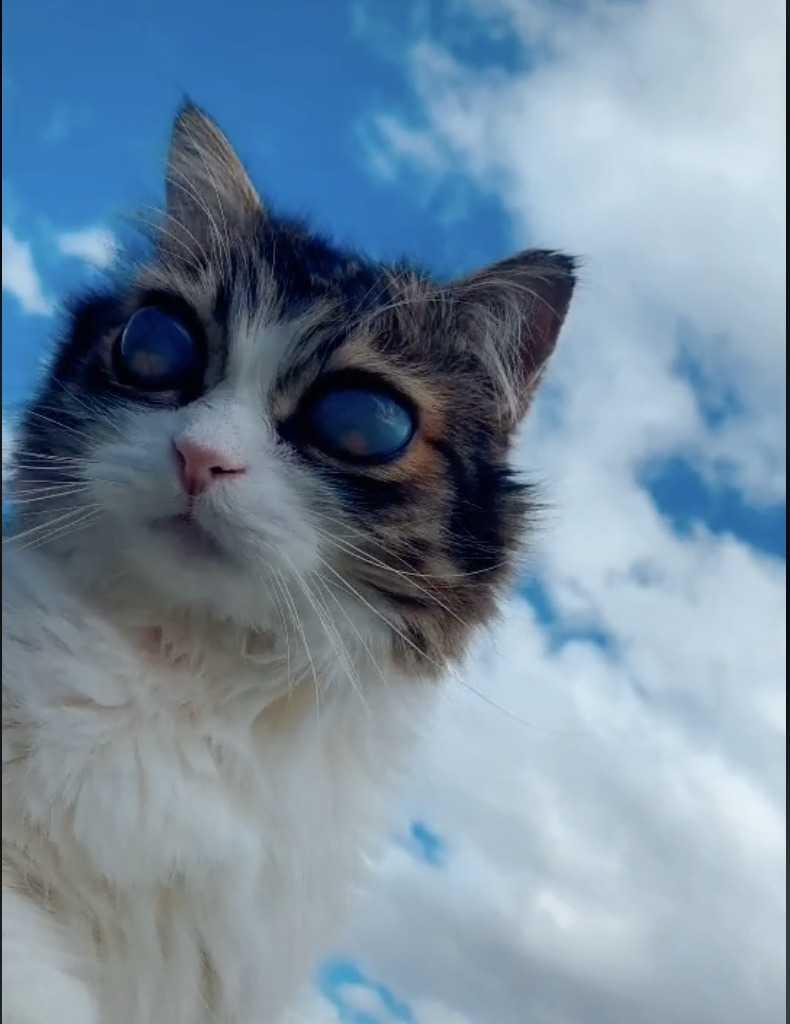 Oczy kota nagle tracą kolor, gdy trafia do domu nowego właściciela – powód skłania miłośniczkę zwierząt do działania