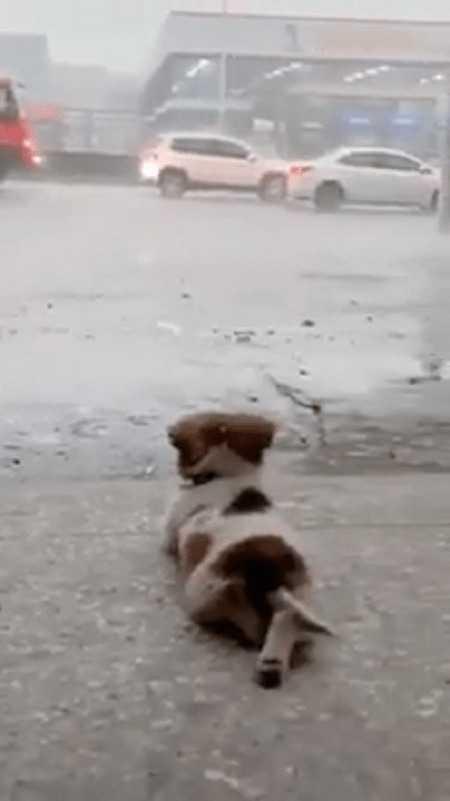 Pies nie kocha niczego innego, tak jak podziwiania deszczu – nagranie krąży po internecie