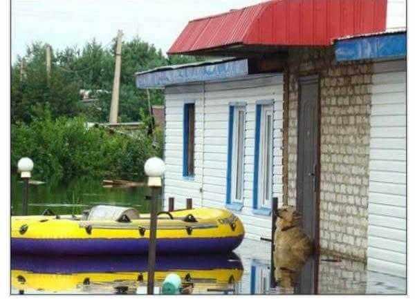 Kiedy zobaczysz, co ten pies zrobił w trakcie powodzi, zabraknie Ci słów
