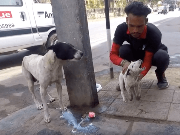 Psia mama wyła i płakała, aby ktoś uratował jej szczeniaka. Błagała ludzi o pomoc. Omijali ją…