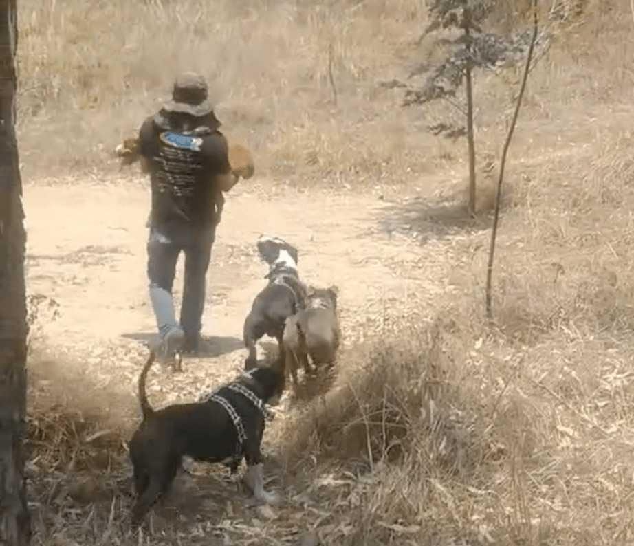 Tata biega z niepełnosprawnym szczeniakiem trzymając go w ramionach, dzięki temu pies nadal może bawić się z rodzeństwem
