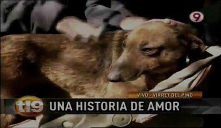 Kobieta podchodzi do bezpańskiego psa i zauważa wystającą spod niego małą rączkę – od razu domyśla się, że coś jest nie tak