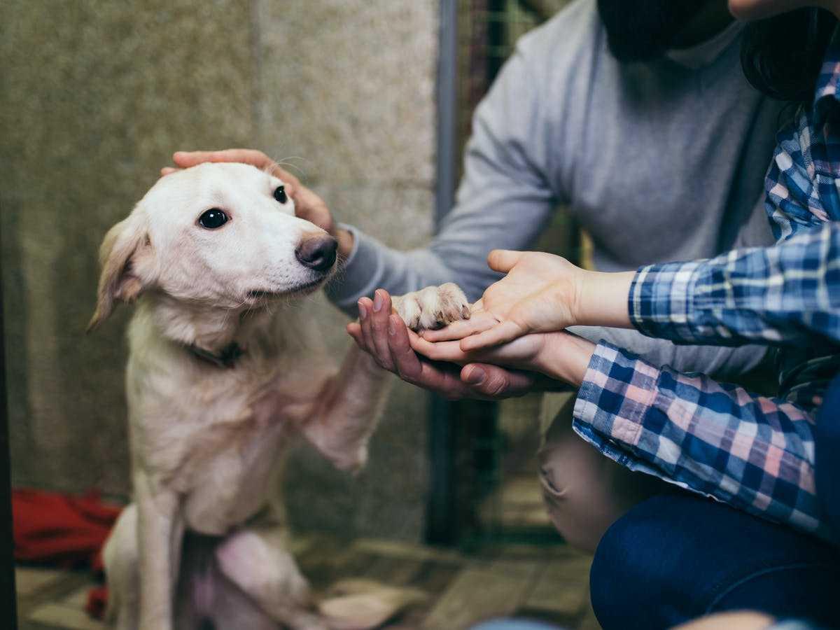 Probował zabić psa, zwierzę cudem uratowano. Jest wyrok sądu