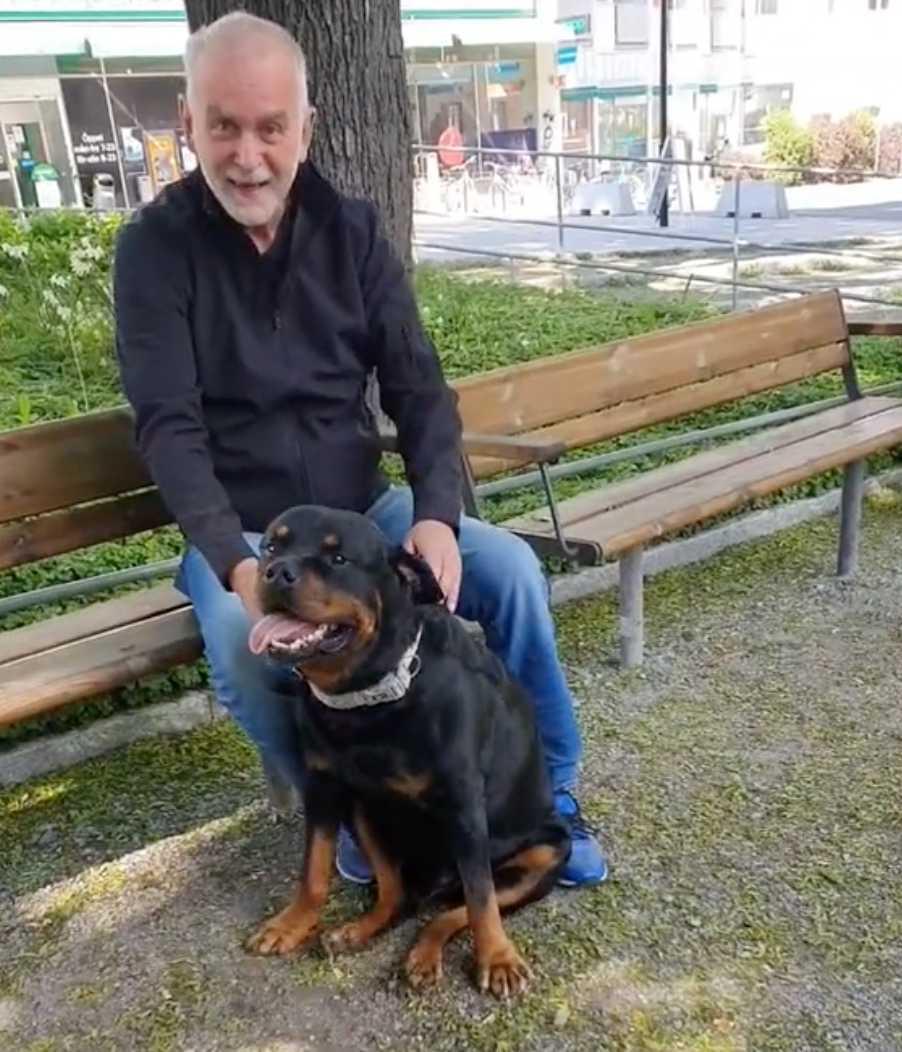 Przyjazny rottweiler rozwesela w parku starca, który właśnie stracił własnego psa
