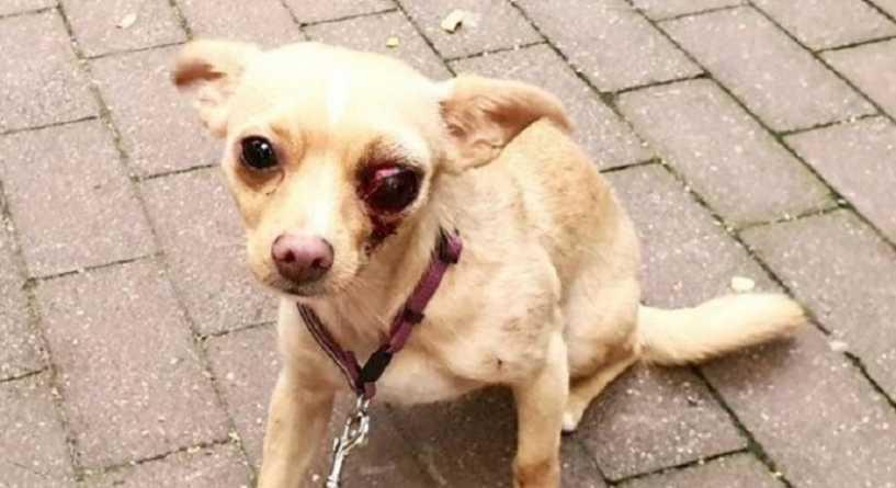 Tak znęcał się nad psem, że wypadło mu oko. Policja zatrzymała go w parku, grozi mu 2 lata więzienia