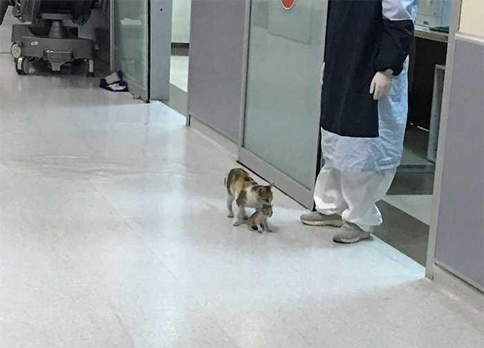 Kotka przyprowadziła swoje chore dziecko do szpitala w nadziei, że lekarze jej pomogą