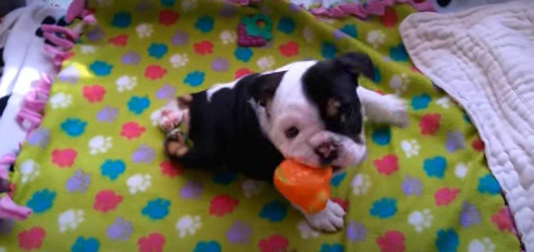 Ten pies nie powinien przeżyć, jednak miłość właścicieli okazała się silniejsza niż choroba