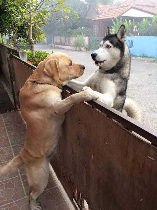 Ten pies ucieka z domu i pędzi do swojego przyjaciela! Ich spotkanie to wzruszający widok!