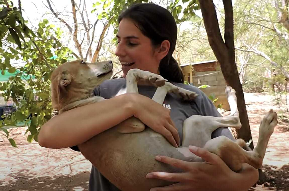 Psa pozostawiono na śmierć z raną w głowie – kilka tygodni później każdy ma łzy w oczach, widząc czego dokonali miłośnicy zwierząt