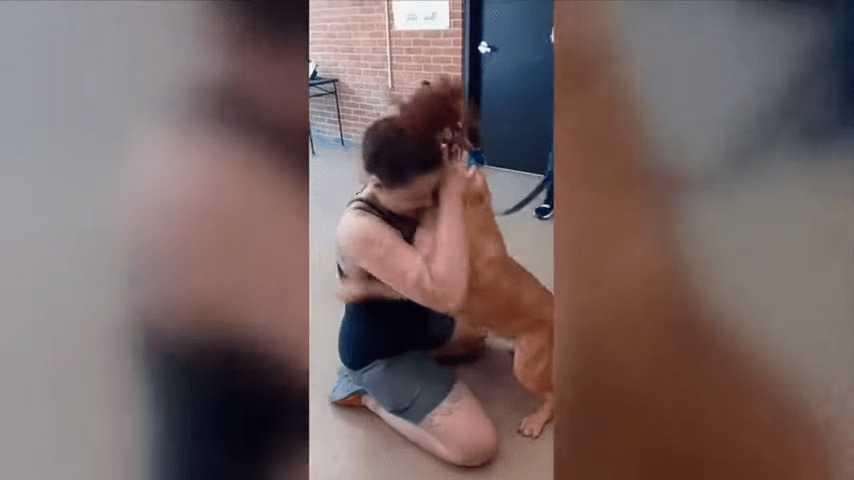 Kobieta sprawdza stronę adopcyjną schroniska i znajduje swojego psa, który zniknął dwa lata temu