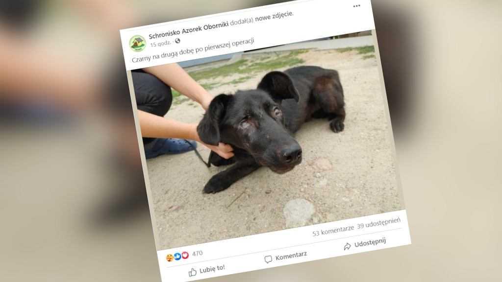 Czarnków. Policja szuka sprawcy, który postrzelił psa 56 razy. Jest nagroda
