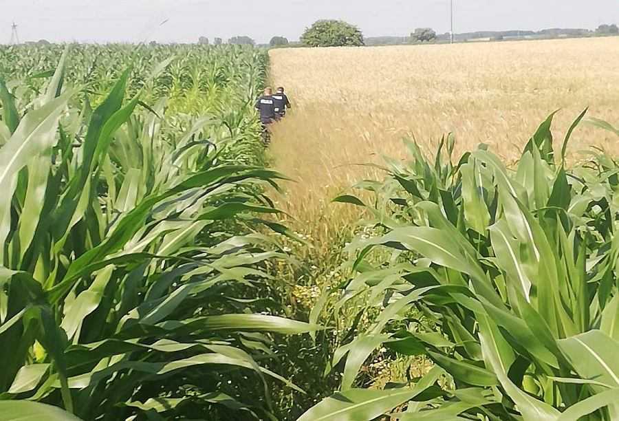 """Podlaskie. Wjechał w pole kukurydzy i rozebrał się do naga. """"Myślał, że będzie niewidoczny"""""""