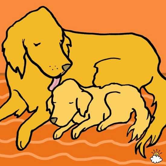 Warto pozwalać psu, aby cię lizał. To korzystne dla twojego zdrowia