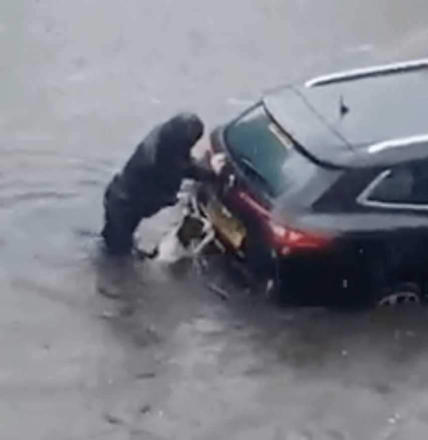Pies pomaga właścicielowi wypchnąć zalany samochód z wody
