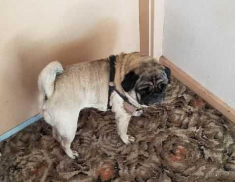 Mężczyzna zostawił psa z profesjonalnym opiekunem, kiedy dostał od niego zdjęcie pupila, wezwał policję