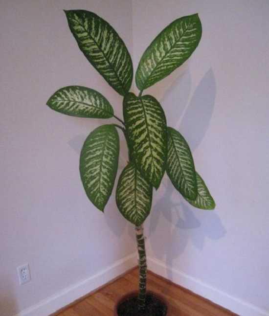 Mały chłopiec zmarł po kontakcie z tą toksyczną rośliną. Sprawdź czy na pewno nie masz jej u siebie w domu