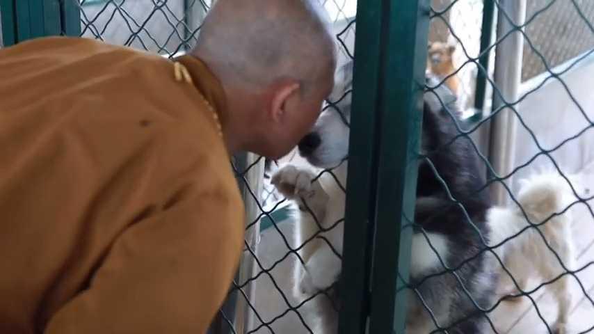 Buddyjski mnich poświęca swoje życie ratowaniu tysięcy bezpańskich psów