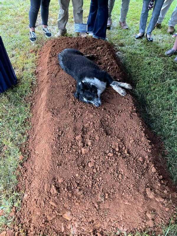 Po tym, jak zabito 22-latka, jego zrozpaczony pies kładzie się na grobie w trakcie pogrzebu
