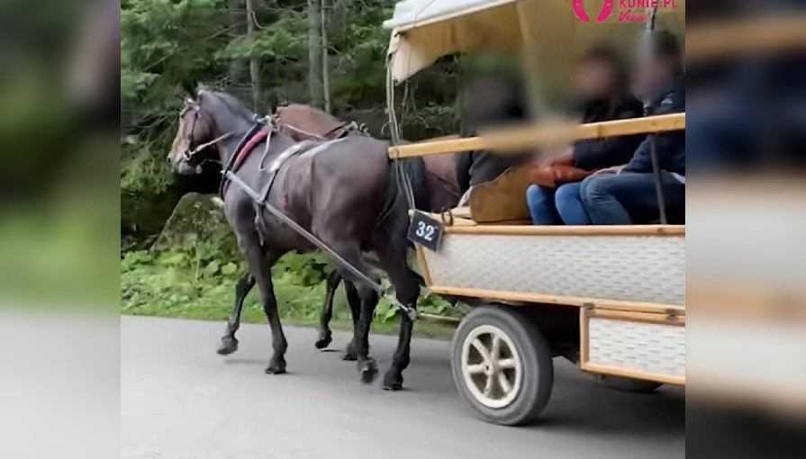 Aktywiści: Kulejący koń ciągnął wóz z turystami nad Morskie Oko. Zawiadomiono Park Narodowy