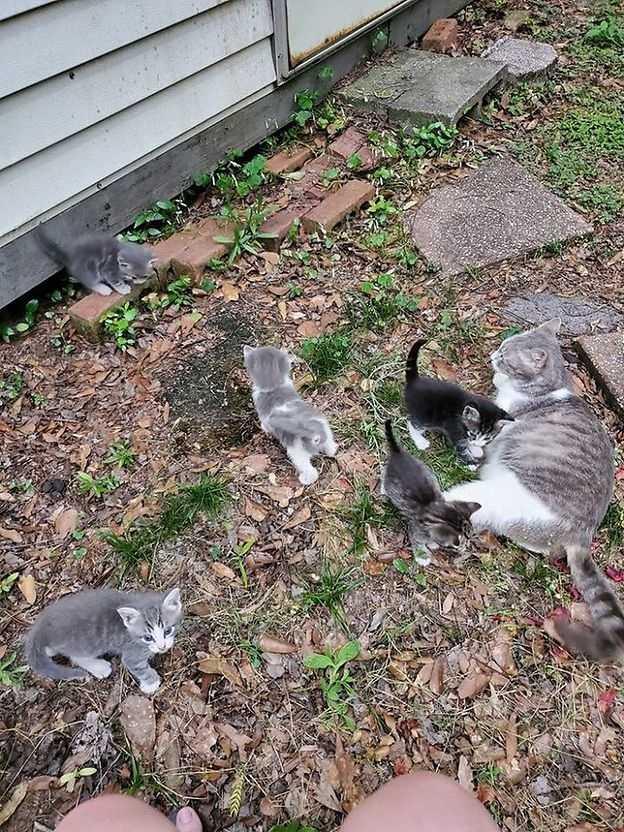 Kobieta oswoiła dziką kotkę. Zwierzę zaprowadziło ją do stodoły