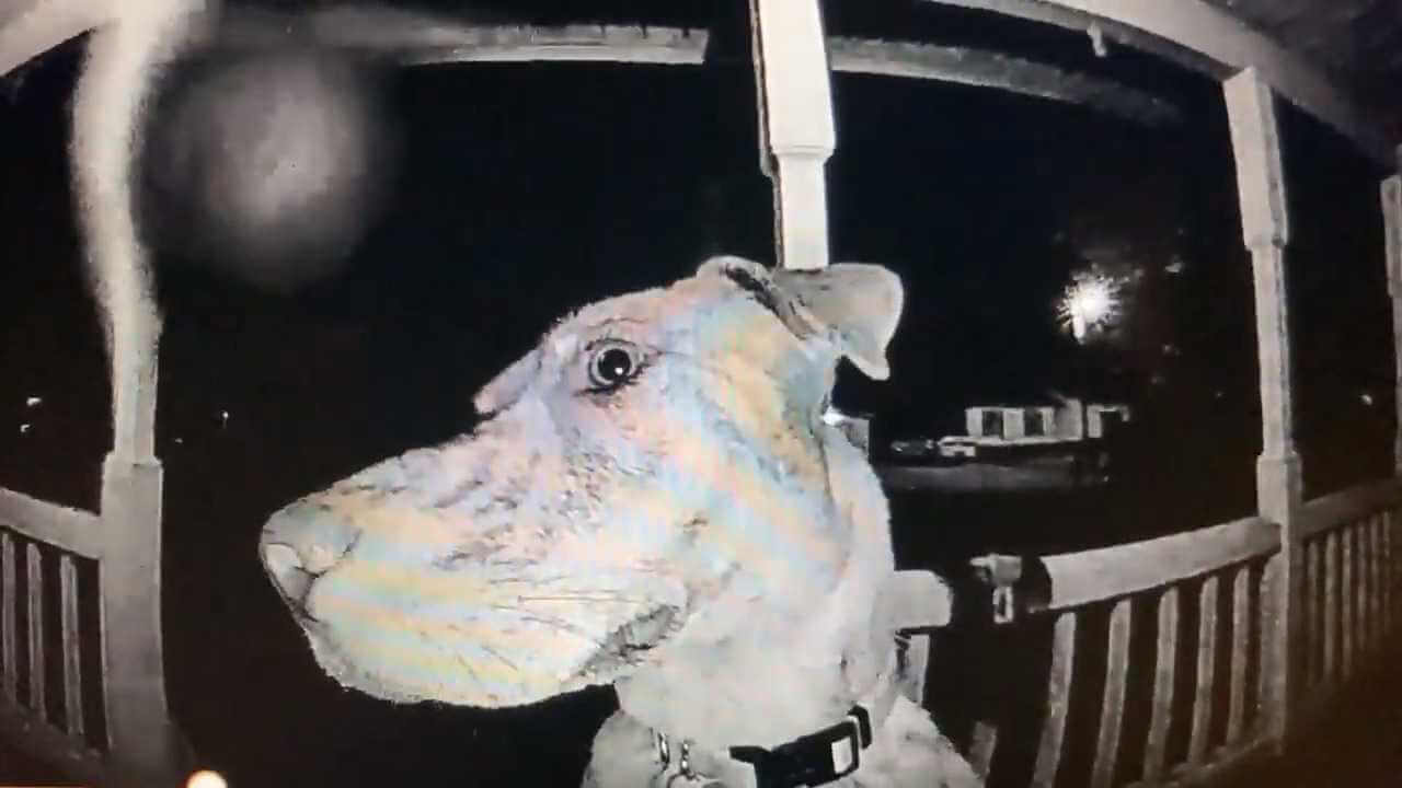 Zaginiony pies wraca do domu i dzwoni do drzwi właścicieli o 3 nad ranem